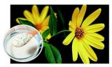 Série blanche de Prebiotics de poudre d'inuline