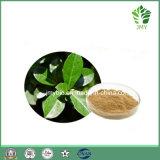 Oleuropeina verde oliva naturale pura 20%~60% dell'estratto del foglio