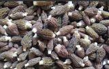 Produits biologiques cultivés de champignons séchés morilles des aliments de qualité supérieure