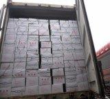 Frais de vente chaude de la récolte de haricots en conserve de qualité premium large