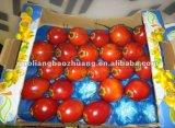 Bandejas de cubo de plástico descartável de frutas e vegetais