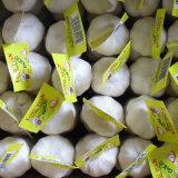 Aglio bianco puro del piccolo imballaggio (5.0cm ed aumentano)
