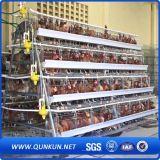 Cage de poulet pour la ferme avicole pour le Nigéria