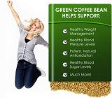 Superabnehmenprodukt-grüner Kaffeebohne-Auszug