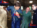 Pferdeartiges Schwangerschaft-Testgerät-Veterinärinstrument, Veterinärgerät, Veterinärultraschallmaschine für Pferd, Kuh, Vieh, Veterinärultraschall-Scanner
