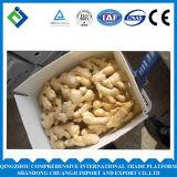 Neues Getreide-China-frischer Ingwer von 250g plus