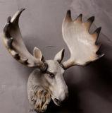 Американское естественное украшение смолаы стены Antlers вися