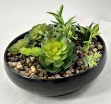 Piante succulenti artificiali di alta qualità