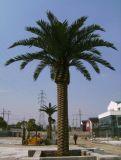Alta calidad para exteriores 8 metros artificial Fecha de la palmera