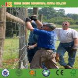 junção de dobradiça padrão de 8FT EUA que cerc o cerco dos cervos feito em China