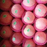 La parte superior de la calidad de color rojo dulce de manzana Fuji