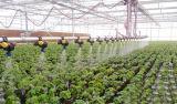 현대 농업 설치를 위한 지적인 유리제 온실