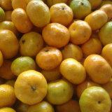 Boa qualidade de doce doce doce mandarim
