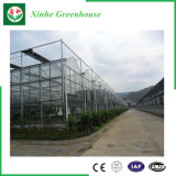 Légumes/jardin/fleurs/Chambre verte en verre de ferme pour l'agriculture