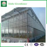 Парник земледелия коммерчески стеклянный