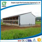 Edificio prefabricado de la estructura de acero de la granja de pollo
