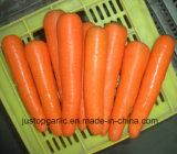 Морковь нового урожая свежая для сбывания