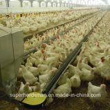 Il pollame gestisce la strumentazione della tettoia per il selezionatore