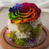Natural Real flor para la decoración de Boda Regalo