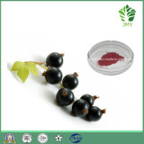 Haut-Sorgfalt-reiner natürlicher Schwarze Johannisbeere-Auszug, Anthocyanin 10%, 25%