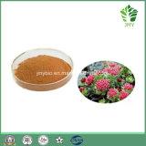 Выдержка 1.2%~5% Salidrosides корня Rhodiola Rosea высокого качества органическая