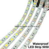 5050 60LEDs/M 12V impermeabilizzano l'indicatore luminoso di striscia flessibile bianco del LED
