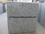지면 도와 또는 싱크대 또는 일 상단 허영 상단을%s Biaco Sardo/G439/Big 백색 꽃 또는 닦았거나 타오른 화강암 석판