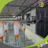 Эффективная автоматическая подавая система приветствованная самомоднейшим оборудованием фермы свиньи