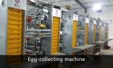 Automático de alta qualidade chinesa Tipo de Controle Ambiental Casa de frango com equipamentos de aves de capoeira (XGZ-GR018)