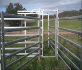 L'ovale dell'Australia recinta il comitato del bestiame del bestiame/comitato d'acciaio del cavallo