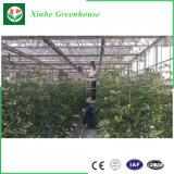 Tipo estufa de vidro de Venlo para Growing do vegetal e de flores