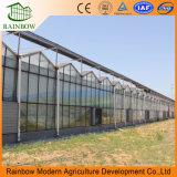 大きいマルチスパンのガラス温室商業温室