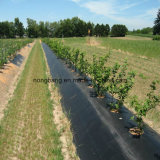 Esteira Eco-Friendly de Weed do controle da erosão de solo para a venda por atacado do uso da agricultura