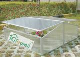 Estrutura frio das emissões para os jovens plantas cultivadas (C302)