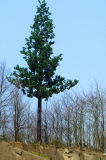 Одной трубки скрытой связи сотового дерево в корпусе Tower