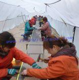 Veilige Dierentuin/Dierlijke Omheining met het Netwerk van de Draad van het Roestvrij staal