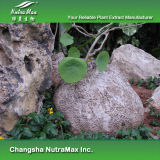Естественная Epigeal выдержка корня Srephaia