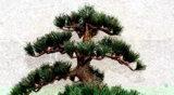 Planta decorativa Artificial - El pino