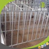 Parada de parto clásica del embalaje y de la gestación usando en granja de cerdo moderna
