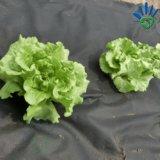 agricultura 30GSM com tela Mulching branca não tecida UV do controle da película/Weed dos PP Spunbond/tampa à terra do preto