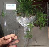 Templado de Vidrio Decorativo formado para la construcción de muebles
