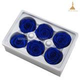 6pcs gros 5~6cm Kunming Forever Rose MFG pour le parti de fournitures