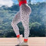 Academia de elevada formação Bounce pequeno ponto preto impressas cintura elevada Perneiras Ioga calças desportivas