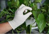 Prezzo elastico medico impermeabile a buon mercato a gettare superiore dei guanti del lattice del guanto