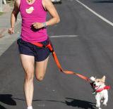 조정가능한 손은 달리거나 걷고는 또는 하이킹을%s 개 가죽끈을 해방한다 (KCY003)