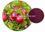 Выдержка клюквы высокого качества естественная 10-70% PAC