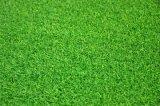 Relvado sintético e artificial do verde de colocação para o golfe (GFN)