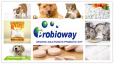Multi-Belastungen Wasser Soluable HundProbiotics Puder für Diarrhöe