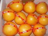 De nouveaux frais standard de miel-exportateurs chinois pomelo