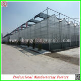 PC Sheet Greenhouse della Cina Hot Sale con Stable Steel Frame